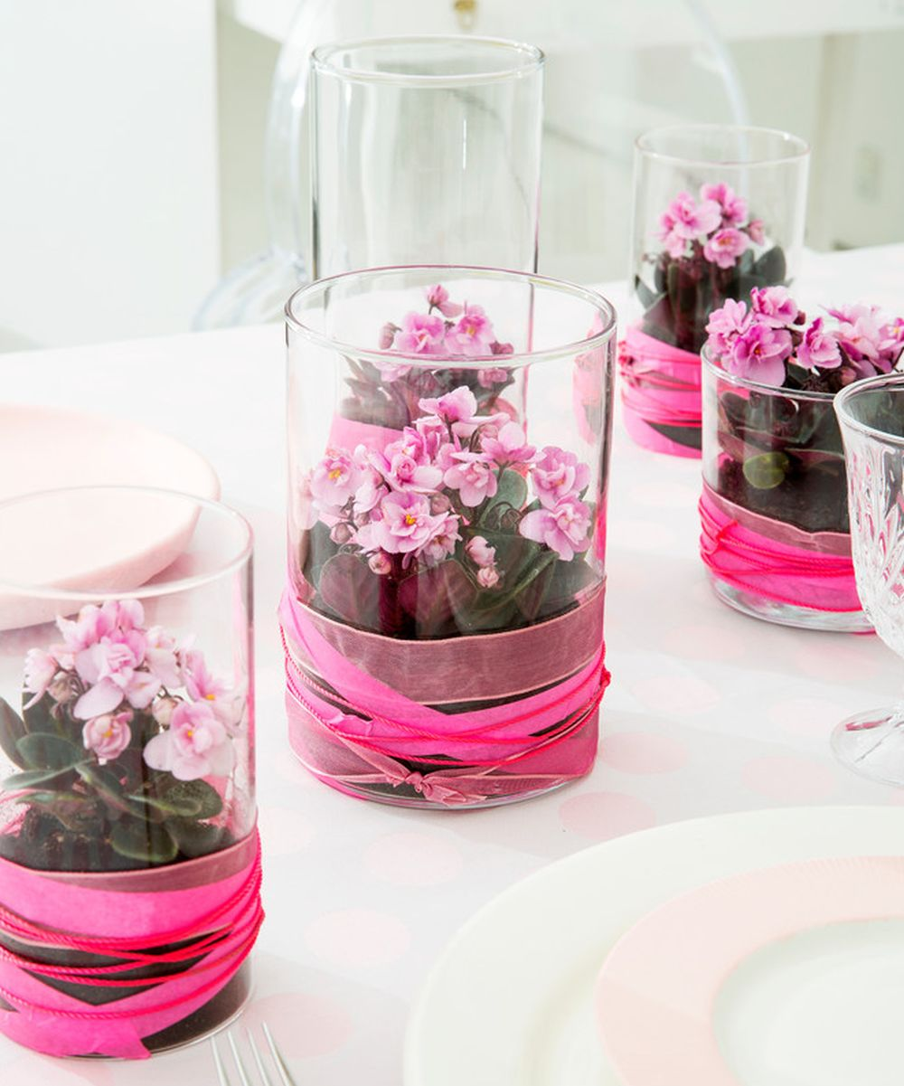 adelaparvu.com despre violetele de Parma, Saintpaulia, Text Carli Marian, Foto Floradania (7)