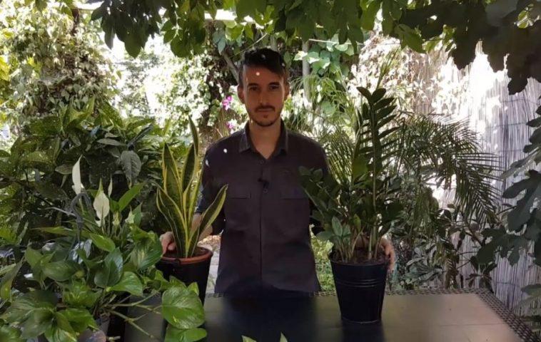 adelaparvu.com despre plante care prefera intunericul, Carli Marian