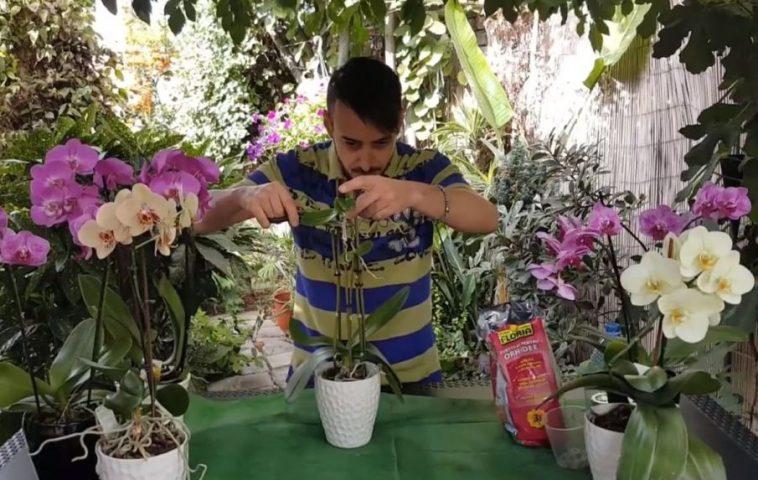 adelaparvu.com despre detasarea puilor de orhidee, keiki, Text Carli Marian (1)