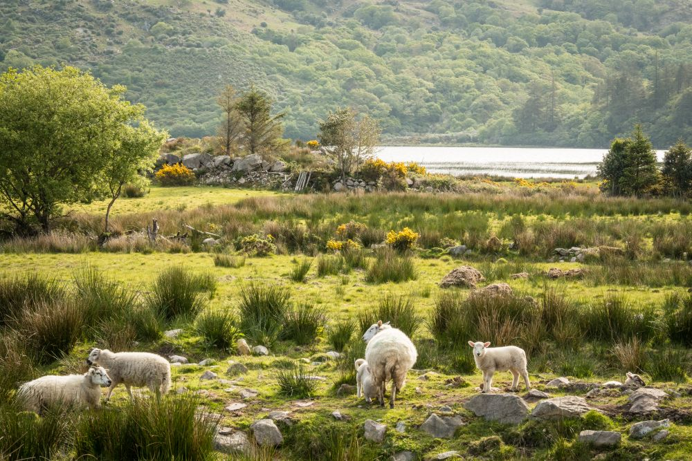 adelaparvu.com despre cabana Lost Cottage Irlanda, design Goodform, Foto Unique Home Stays (22)
