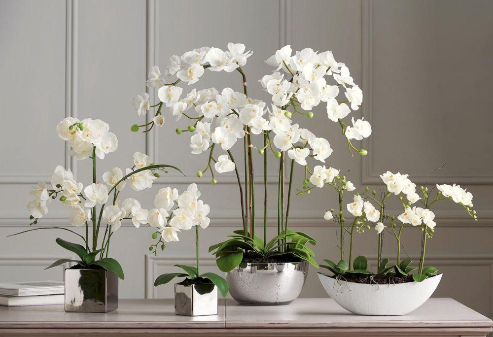 adelaparvu.com despre plante potrivite in dormitor, Text Carli Marian, Foto Next Orchids
