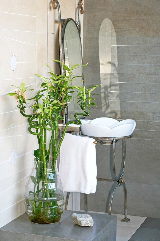 adelaparvu.com despre top 5 plante potrivite in baie, Text Carli Marian (1)