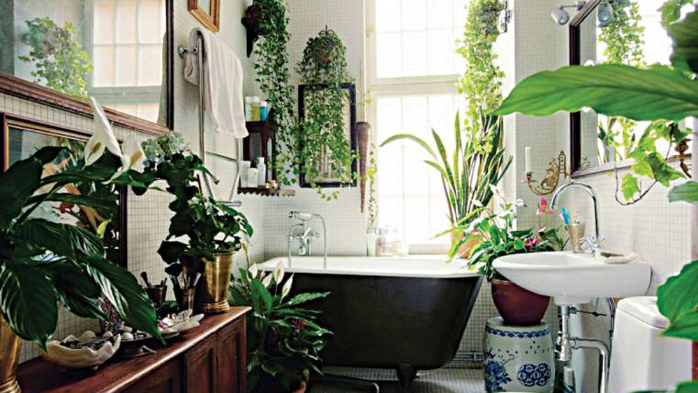 adelaparvu.com despre top 5 plante potrivite in baie, Text Carli Marian (11)