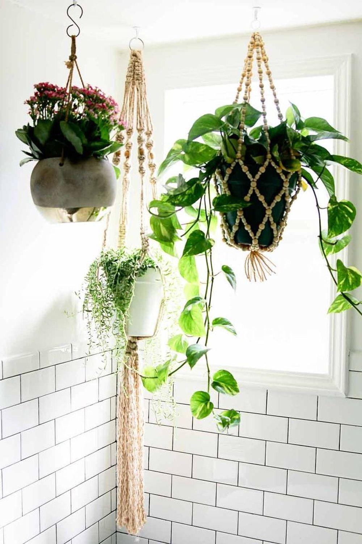 adelaparvu.com despre top 5 plante potrivite in baie, Text Carli Marian (7)