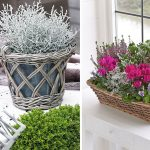 adelaparvu.com despre plante cu frunze argintii, Text Carli Marian