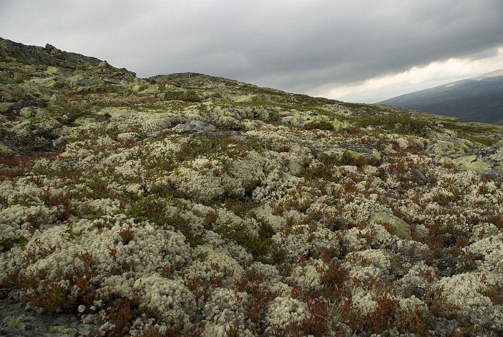 Licheni în mediul lor natural, Foto Willem van Kruijbergen