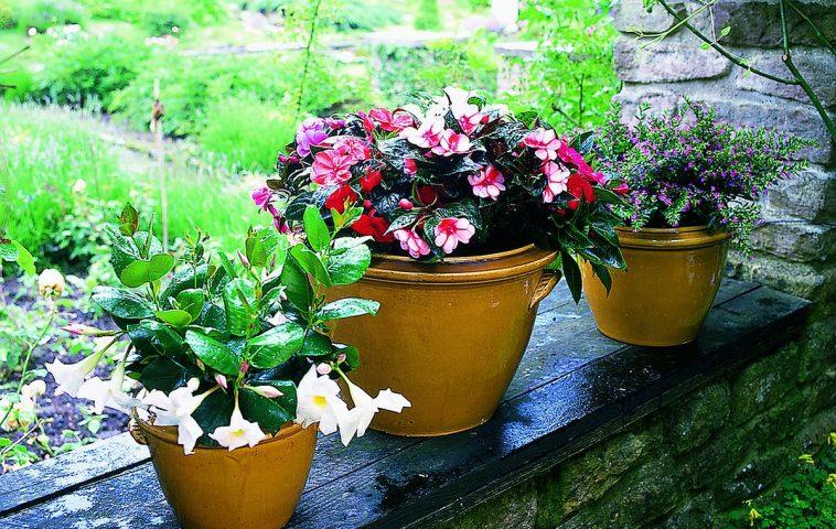 adelaparvu.com despre plante care aduc noroc, in Foto Impatiens, Foto Floradania