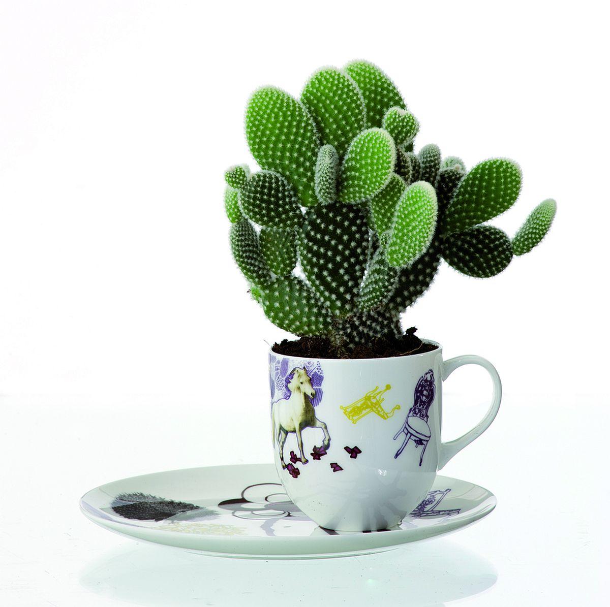 Un cactus plantat în ultima ceașcă rămasă întreagă din setul primit cadou poate fi ceva absolut inedit și surprinzător.