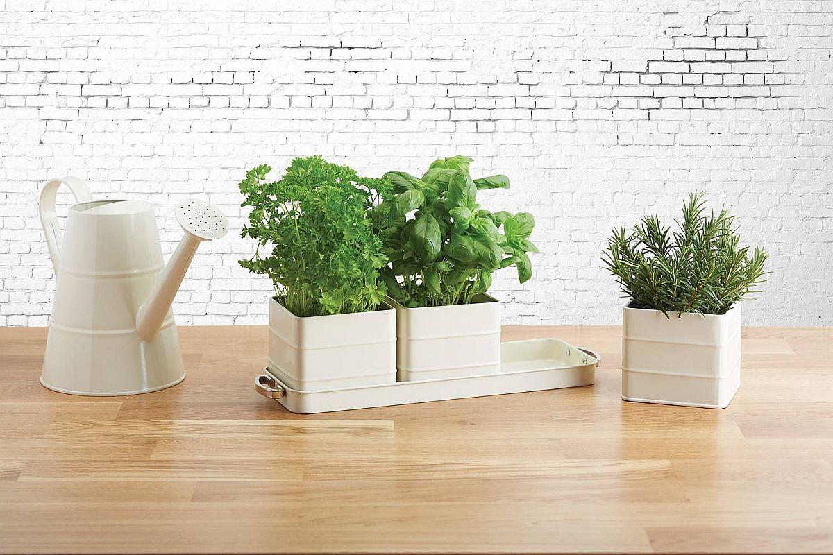adelaparvu.com despre plante aromatice LaDoiPasi (2)