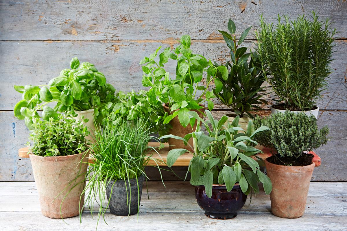 adelaparvu.com despre plante aromatice LaDoiPasi (3)