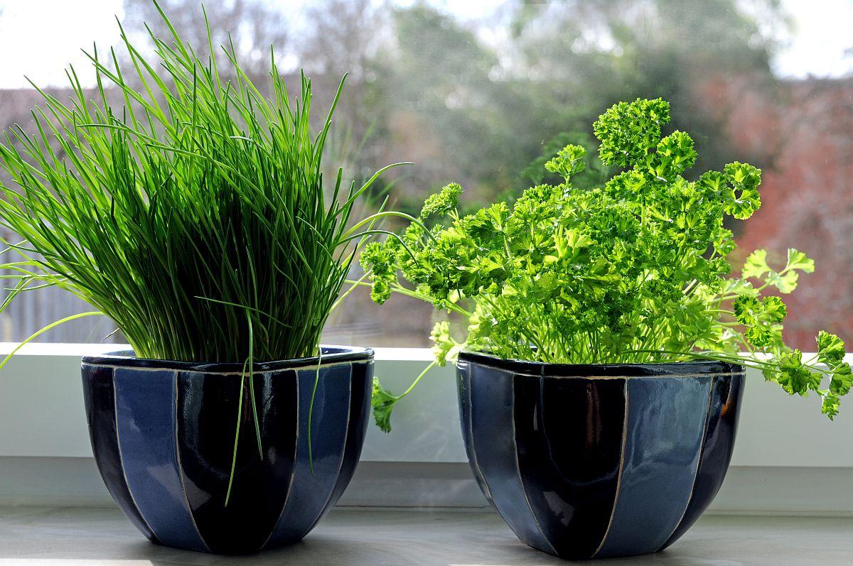 adelaparvu.com despre plante aromatice LaDoiPasi