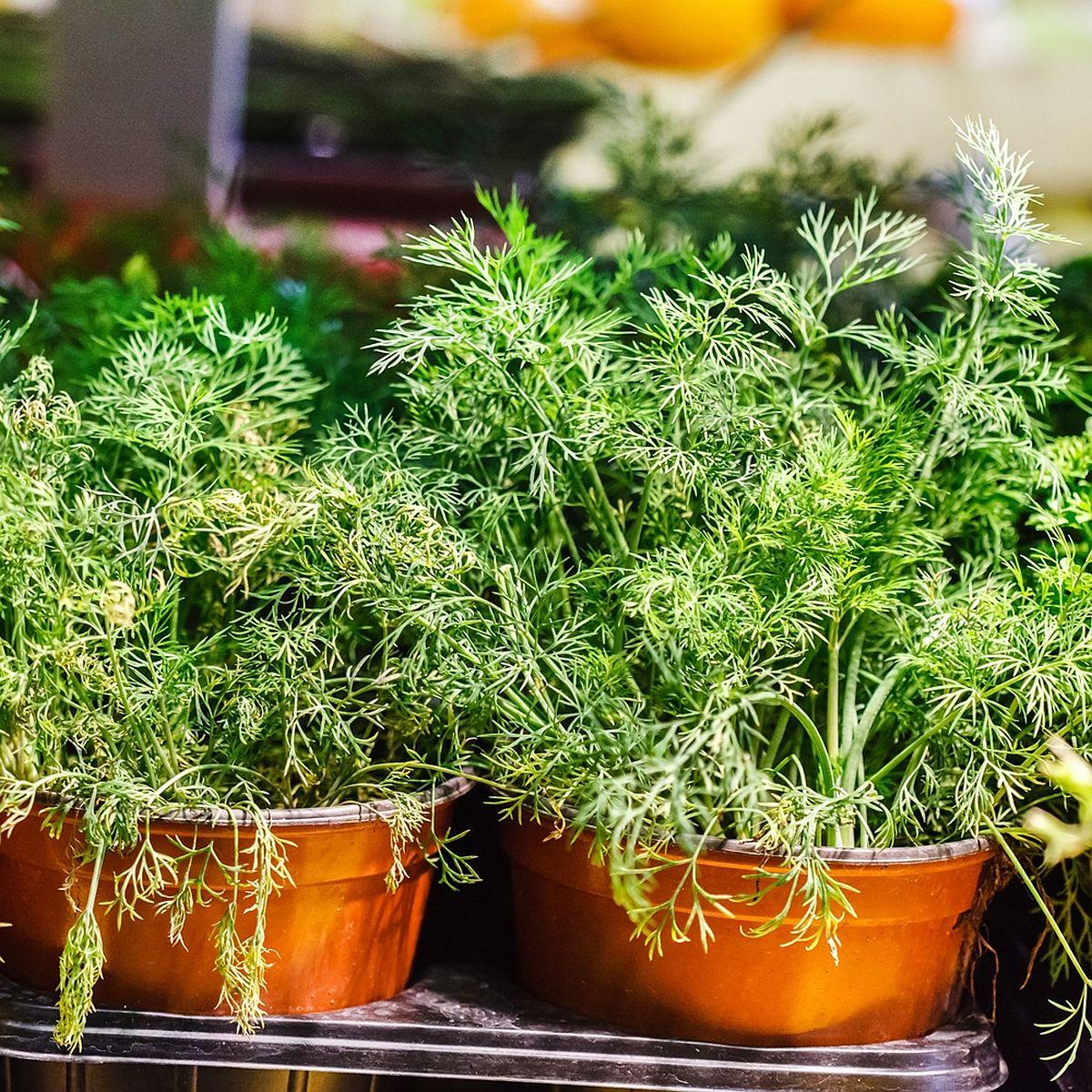 adelaparvu.com despre plante aromatice LaDoiPasi (7)