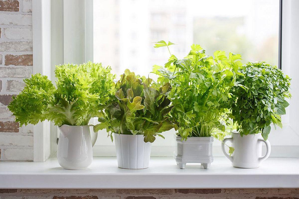 adelaparvu.com despre plante aromatice LaDoiPasi (8)