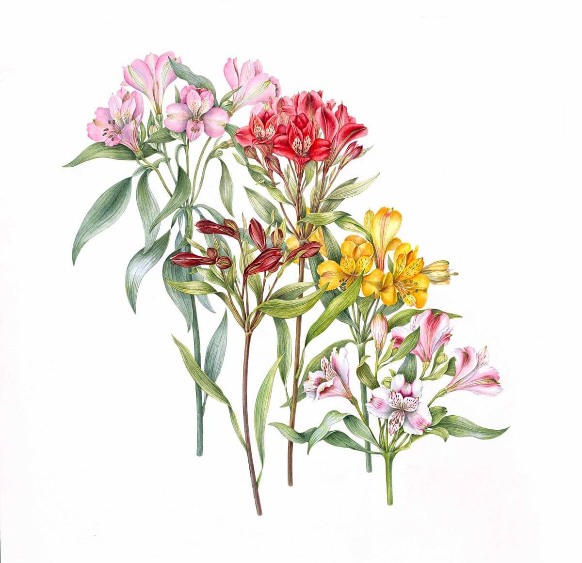 adelaparvu.com despre arta botanica in Romania, Alstroemeria, artist Anita Walsmit Sachs