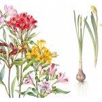 adelaparvu.com despre arta botanica in Romania, RSBA