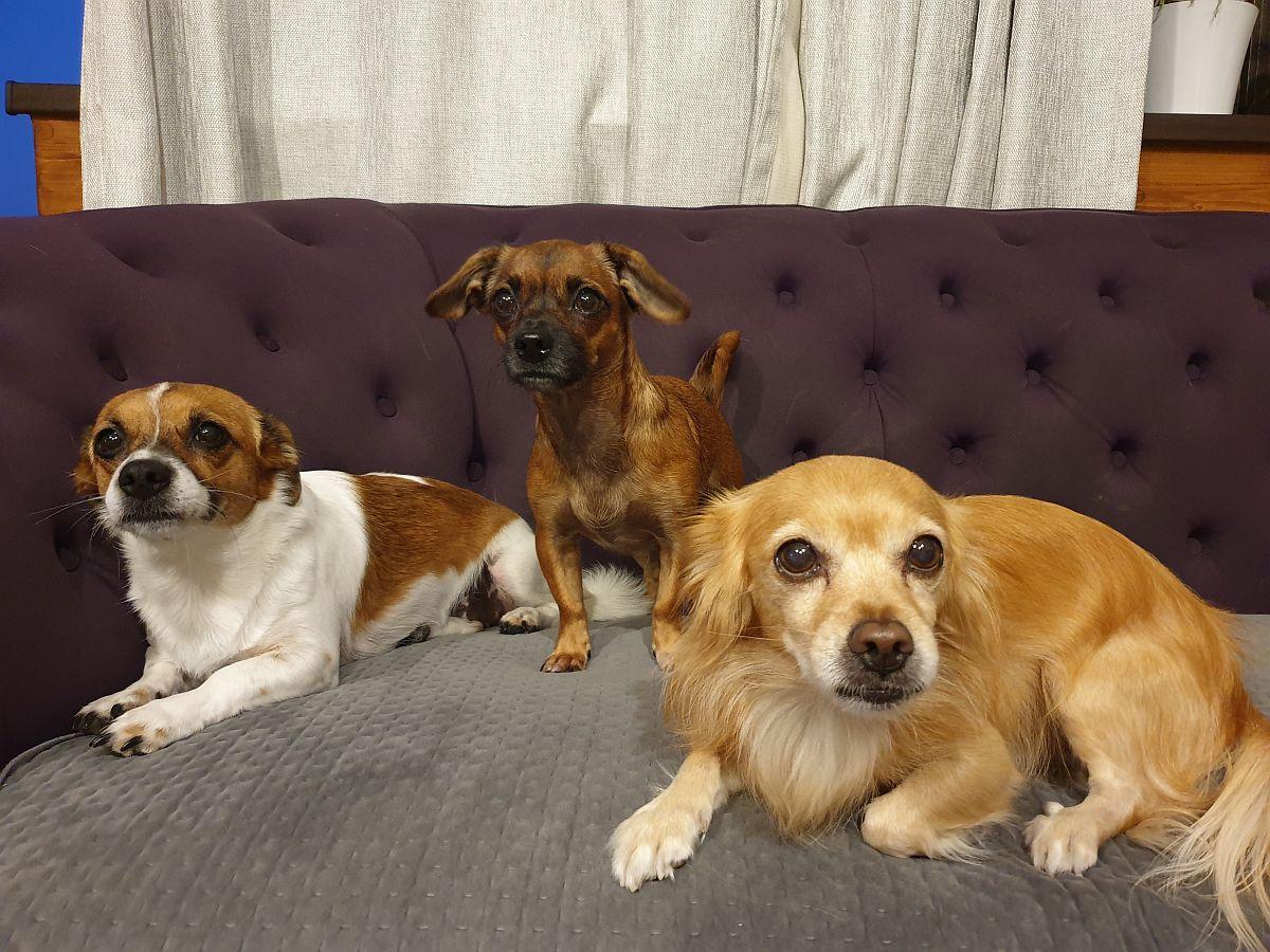 adelaparvu.com despre carte dedicata cresterii cainilor, Foto Adela Parvu (7)
